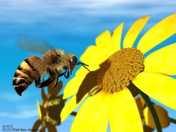 Southern California Bee Removal Service Offers Humane Alternative to Extermination